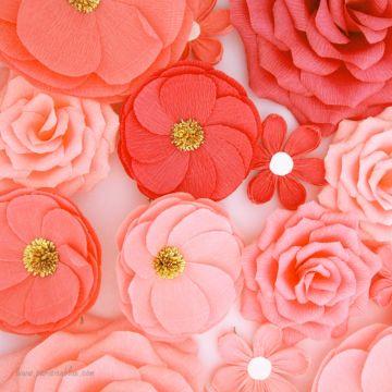 Un maxi mur de 16 Fleurs Corail